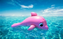 Pink-Dolphin-Anime-Wallpaper
